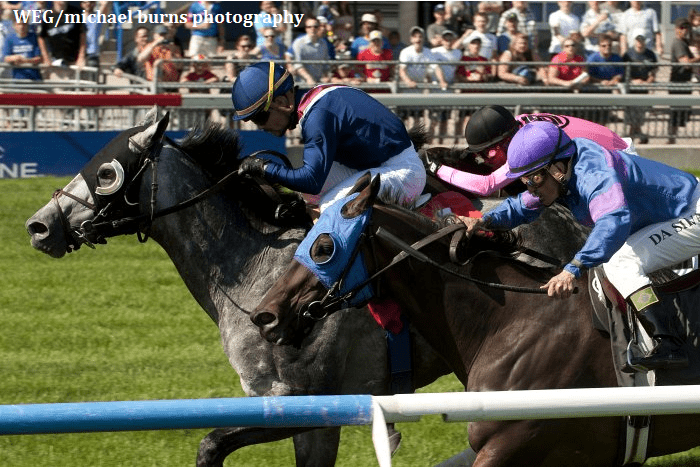 Excaper wins the Grade 2 Connaught Cup at Woodbine Racecourse on May 31.
