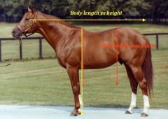 Building A Triple Crown Contender Horse Racing News