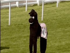 One of the runners in The Mayor's Pantomime Horse Race at Sandown Park