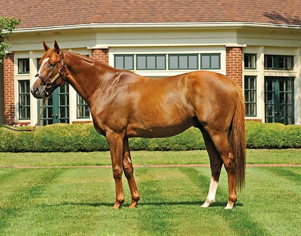 Champion English Channel Moves To Calumet Farm Horse