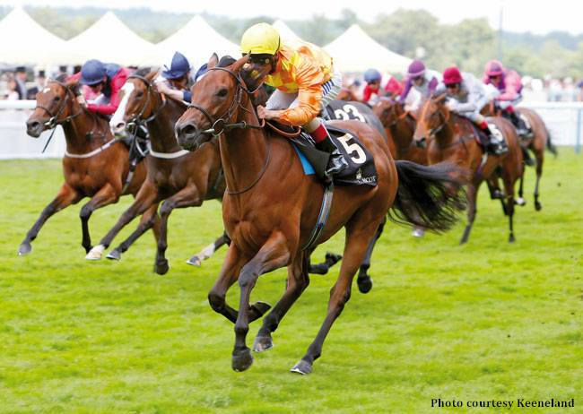 Cursory Glance Takes Charge In Moyglare Stud Horse