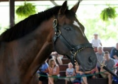 Cigar resided at Kentucky Horse Park for the past 15 years