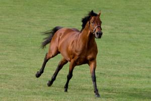 Darley Releases 2015 U S Europe Stallion Rosters Fees