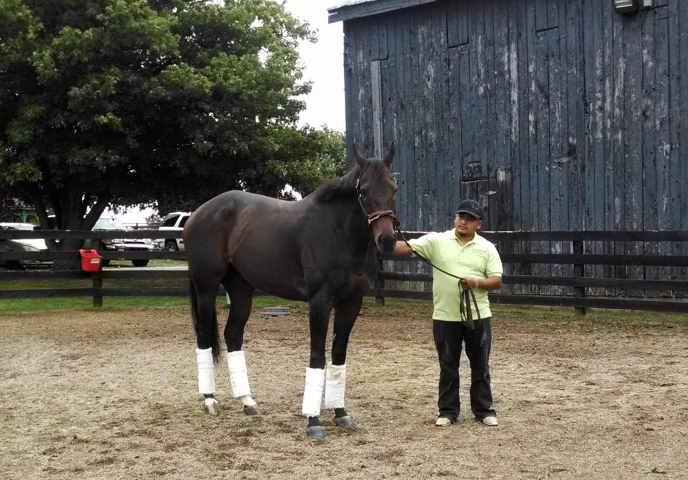 Game On Dude Colic Surgery Veterinarians Find Unusual