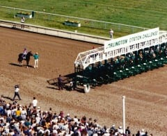 Cigar waits for the start of what would be his 16th straight victory, July 13, 1996