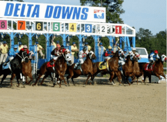Delta Downs Starting Gate