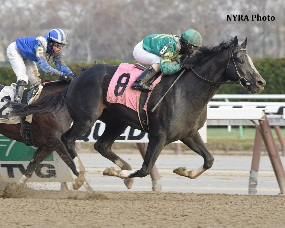 Honor Code Back To Winning Ways With Aqueduct Victory