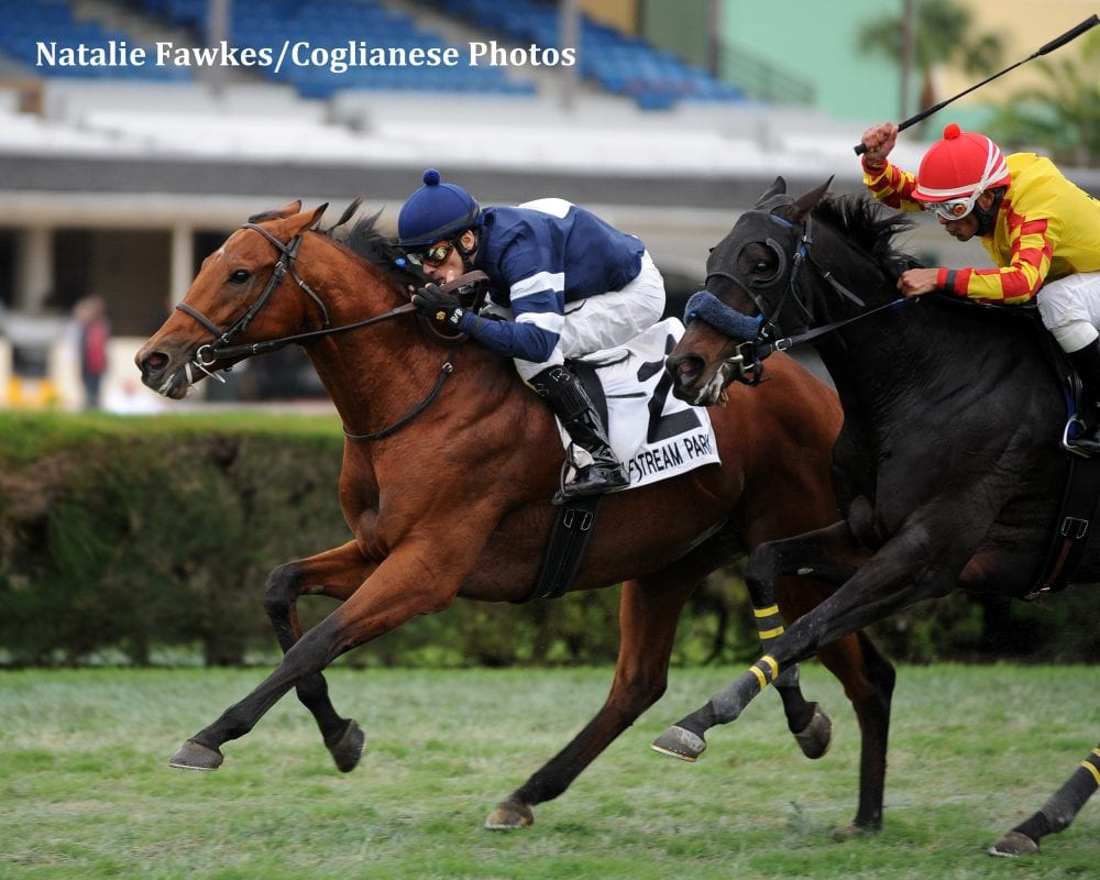 Lubash Closes Late For Tropical Turf Win Horse Racing
