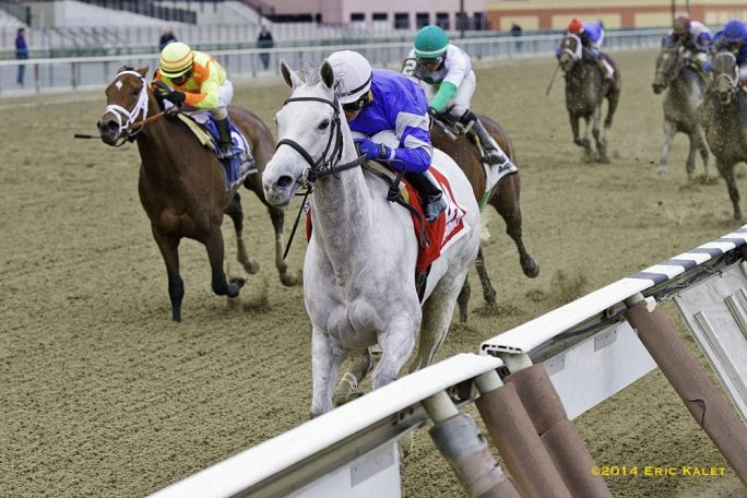 Snowbell Leads Wire To Wire To Capture Comely Horse