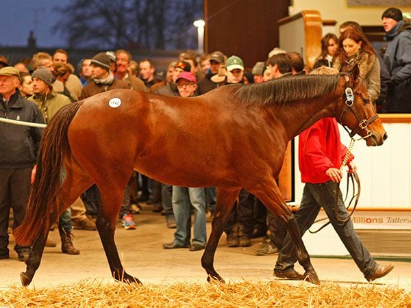 Esentepe In Foal To Frankel Tops Opening Day Of
