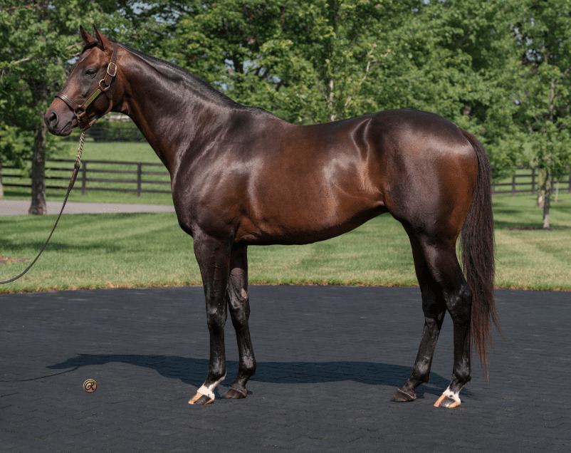 Colonel John Sold Will Stand In South Korea Horse