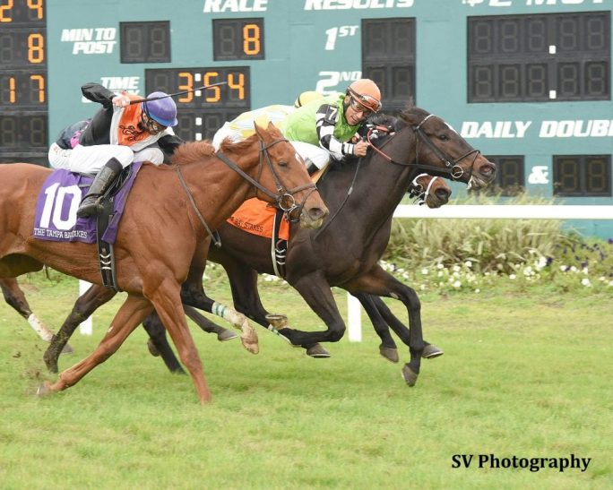 Lochte Wins Photo Finish In Tampa Bay Stakes Horse