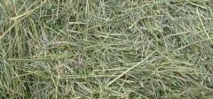 800px-GrassHay12