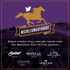 Look for the hashtag #StallionSaturday over the next five weeks on the Breeders' Cup Twitter account (@BreedersCup)
