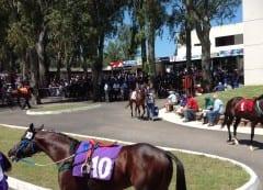 Horses in the paddock at Las Piedras