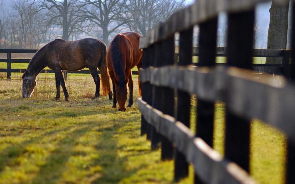 Rutgers To Offer Free Online Seminar On Rotational Grazing ...