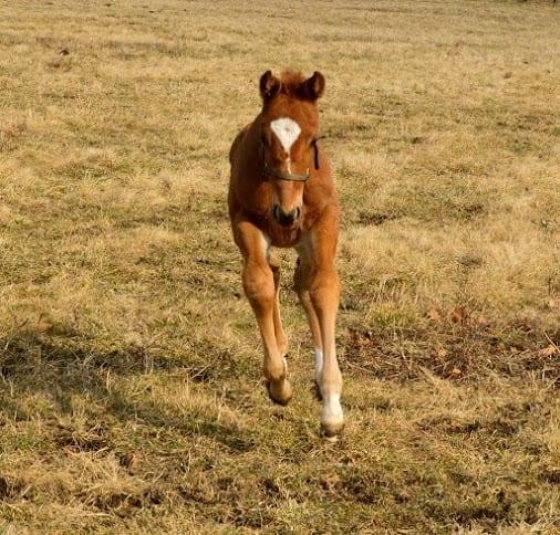 City Splash foal