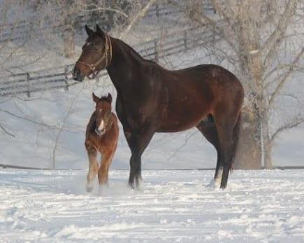 Merck Animal Health Presents Foals Of 2015 Snow Scenes