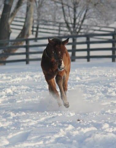 Deceit - Congrats foal
