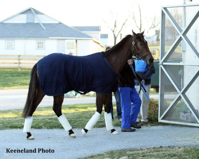 Peace and War arrived at Keeneland March 29.