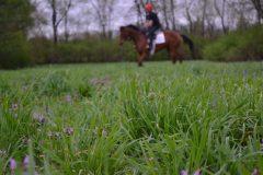 NARA horse and rider jockey field work