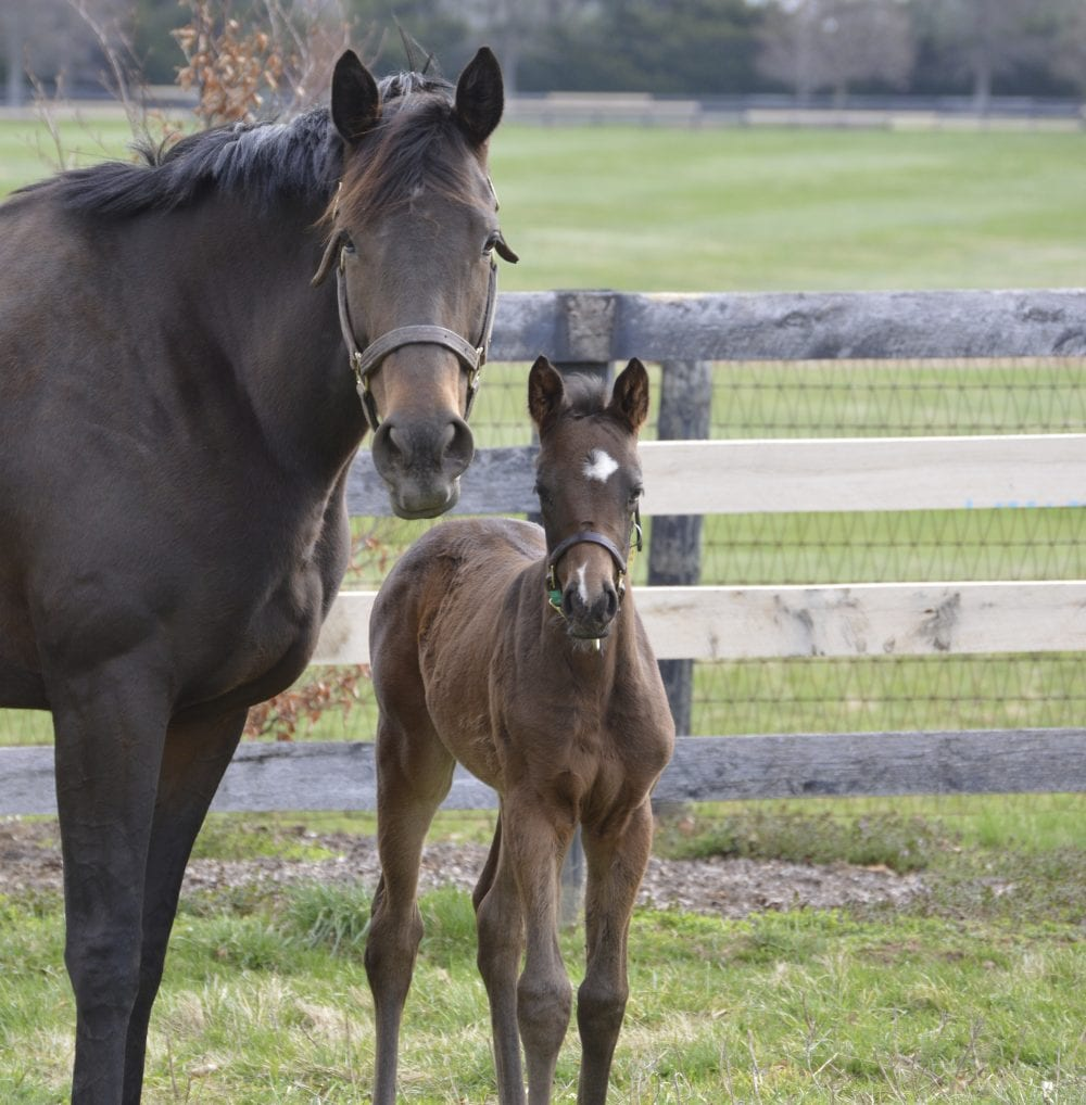 1 2 3 one easy rule for monitoring mare and foal after birth