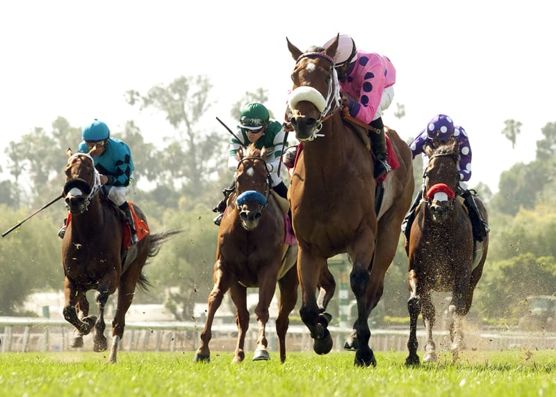 Get Happy Mister Storms Home To Take San Simeon Horse
