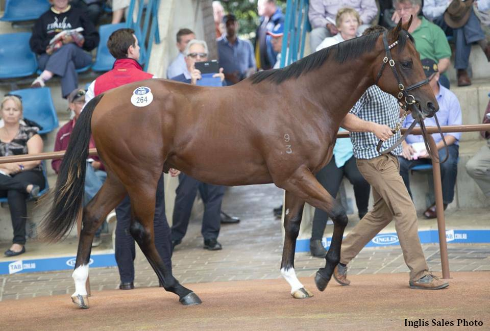 Colt By Snitzel Highlights Strong Day 2 Of Inglis Easter