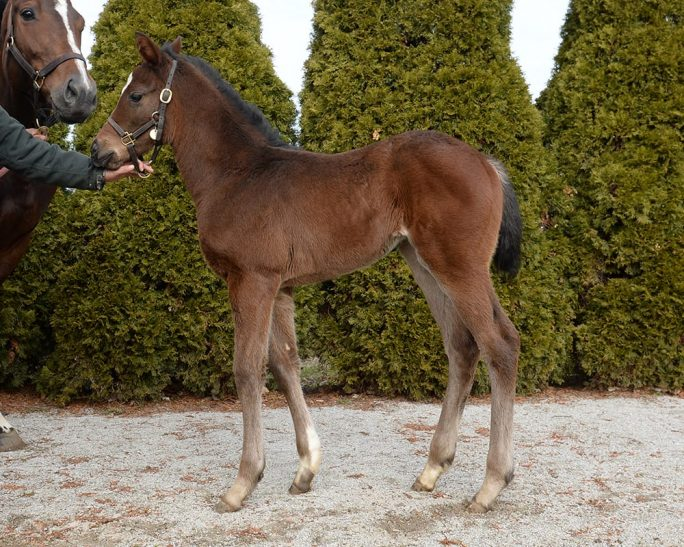 Morning Line filly  2.12.15