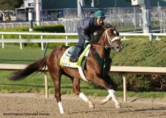 Mr. Z gallops at Churchill Downs April 21, 2015