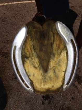 New 'Open-Toed' Shoeing Technique Could Correct Hoof Problems, Shift Paradigms
