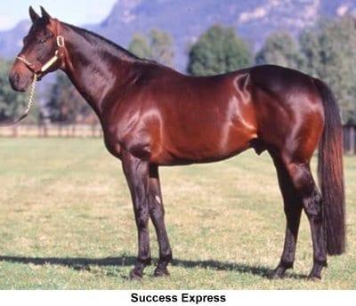 1987 Bc Juvenile Winner Success Express Dies At 30 Horse