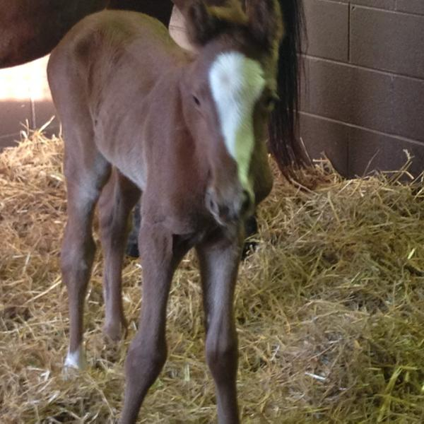 Famous Foals Full Siblings To California Chrome