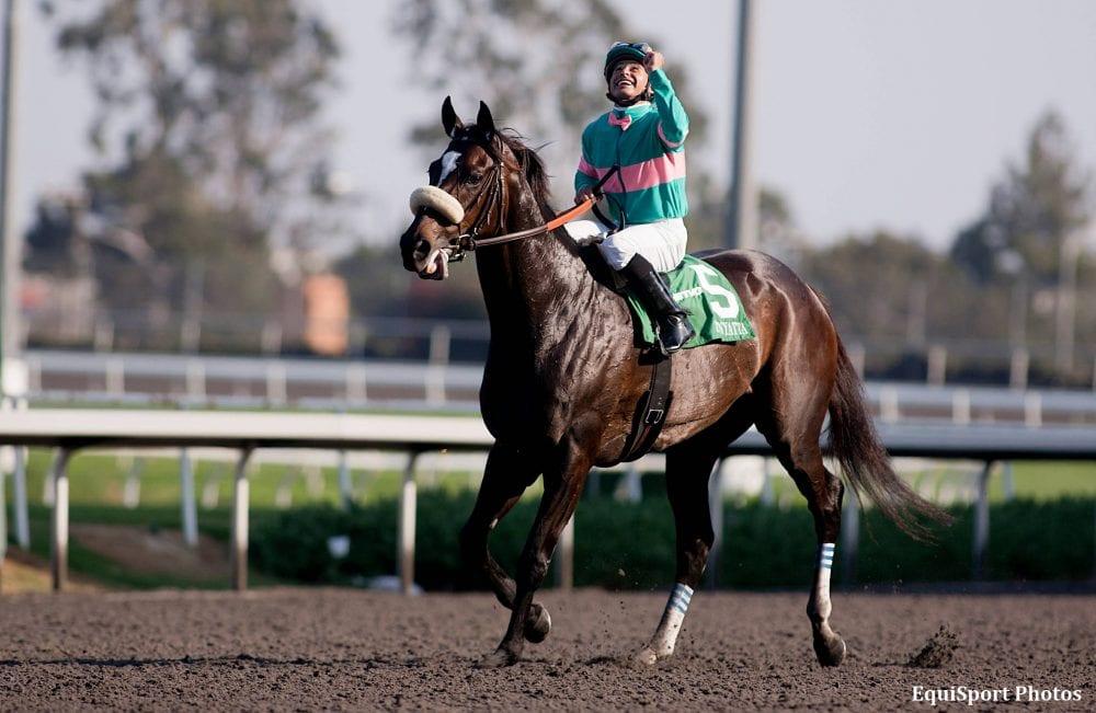 how tall is zenyatta racehorse