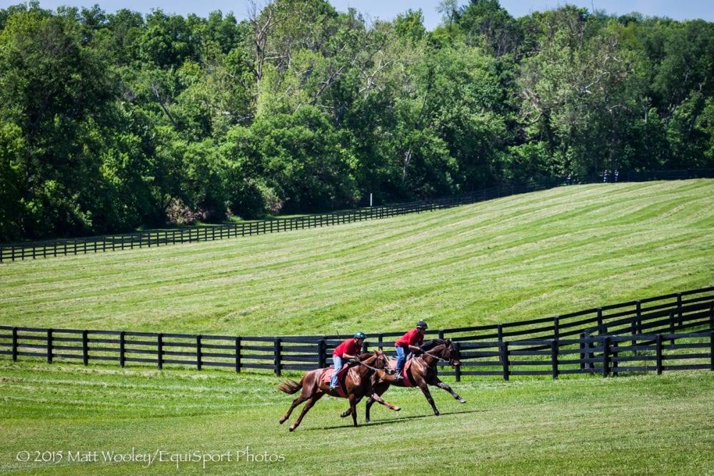 Photos Of The Week Bluegrass Bliss Horse Racing News