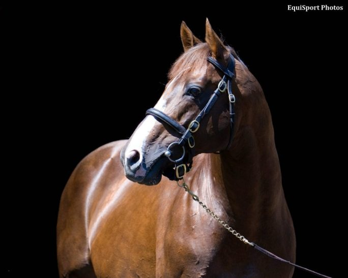 Iron Horse Giant S Causeway Dead At 21 Horse Racing