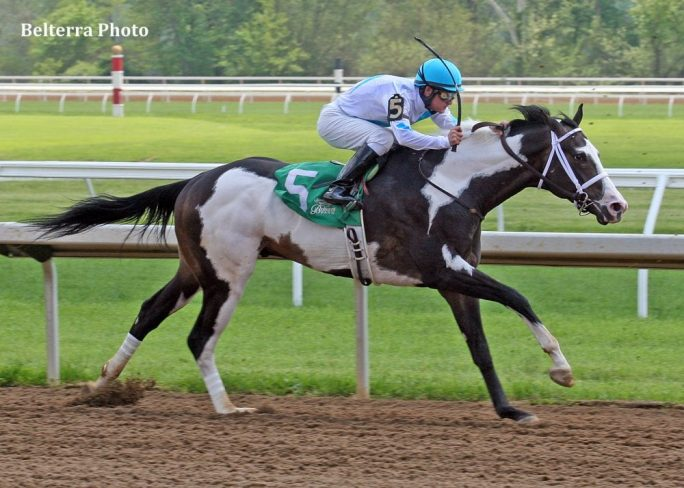 Rare Paint Thoroughbred Third In Racing Debut Horse