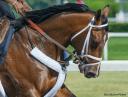 Tale of Verve gallops at Belmont Park