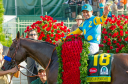 American Pharoah draped with roses after his Kentucky Derby victory