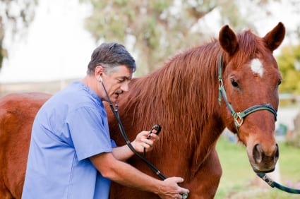 Image result for Insurance Coverage horse