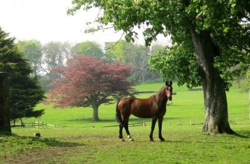Ten Hot Weather Tips For Horses Horse Racing News