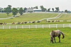 Alston Kerr Archives - Horse Racing News | Paulick Report