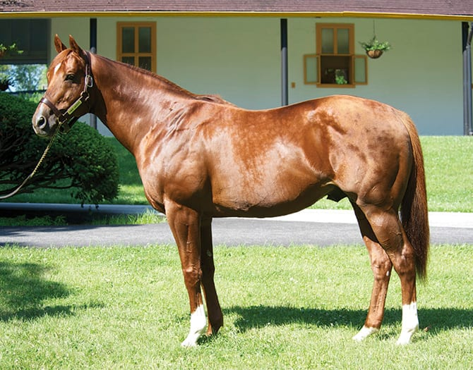 G2 Winner Horse Greeley To Stand In Argentina Horse