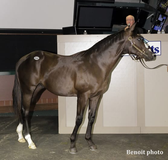 Harlan S Holiday Colt Tapizar Filly Top Inaugural