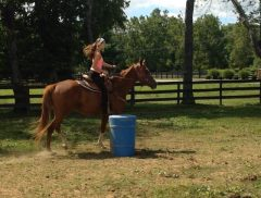 """Sven"" will compete in the barrel racing competition at the Thoroughbred Makeover"