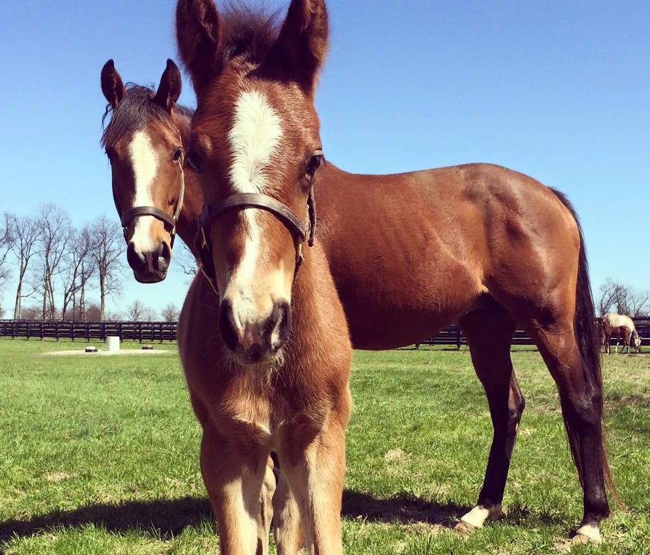Jockey Club Projects Slight Increase To 22 500 Foals For