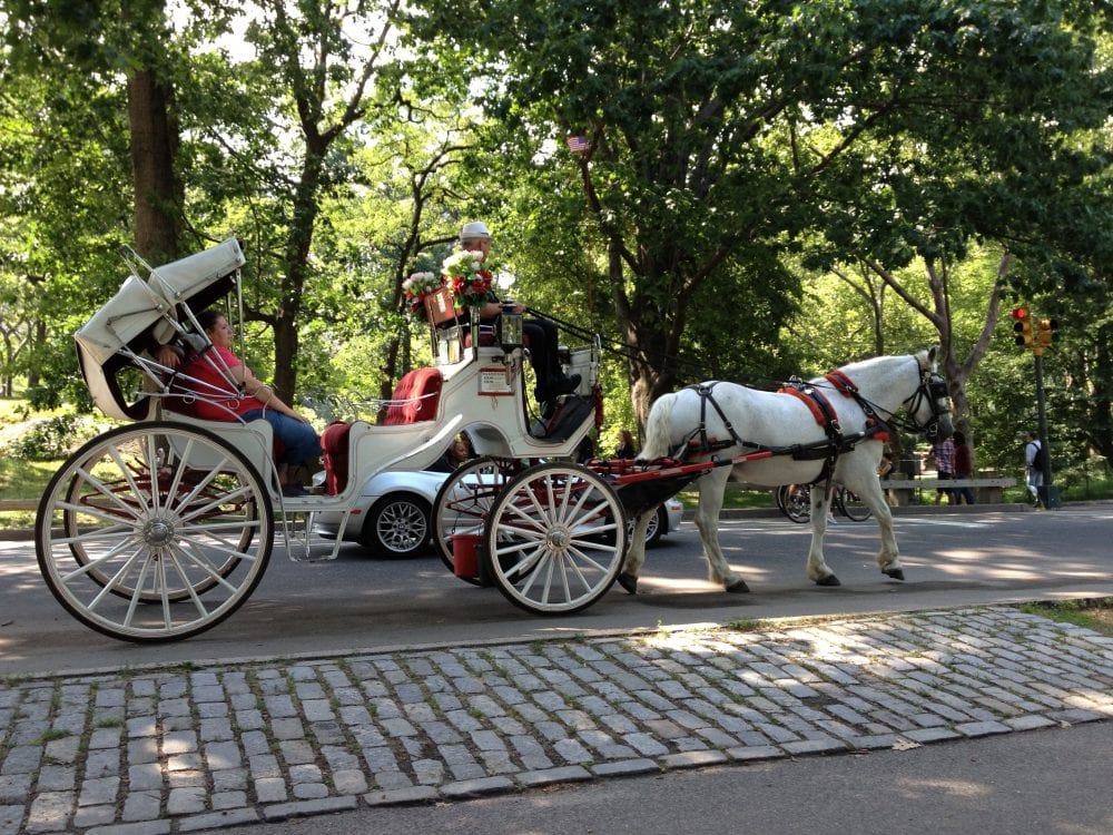 Pope S Visit Puts Nyc Carriage Rides On Hold Horse