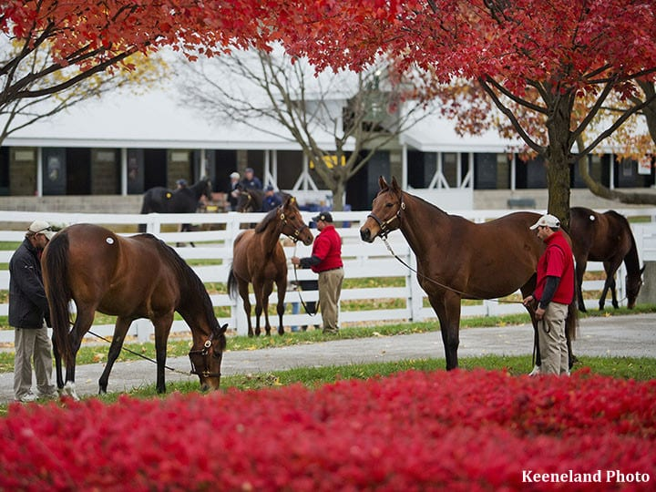 No Rest For The Weary Keeneland November Breeding Stock