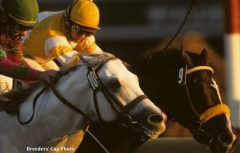 Alphabet Soup (left) and Louis Quatorze battle to the wire, along with Cigar, in the '96 Classic (Breeders' Cup photo)