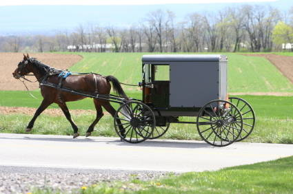 Image result for amish buggy